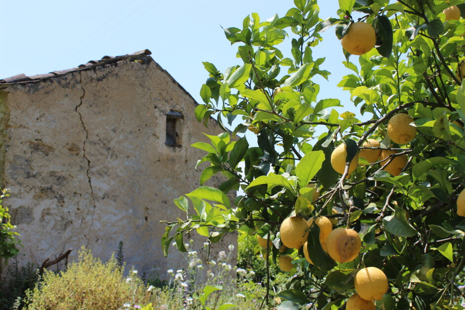 Принц Лимон: как я собирала лимоны на Сицилии