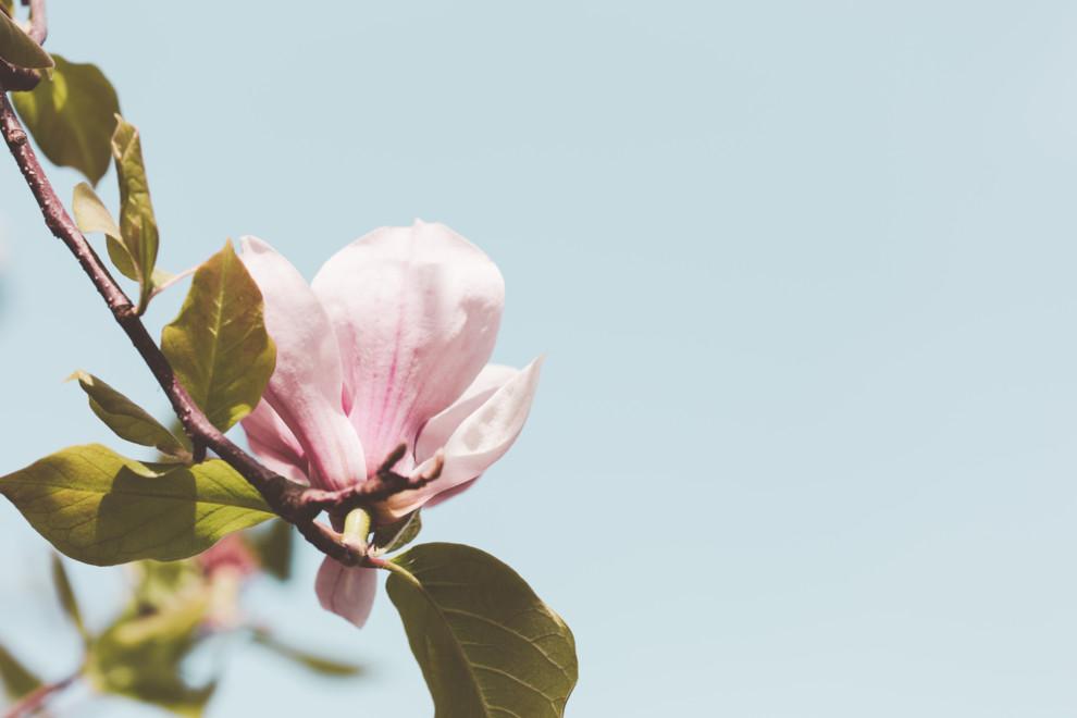 Остановить мгновенье: 10 ароматов с нотами магнолии