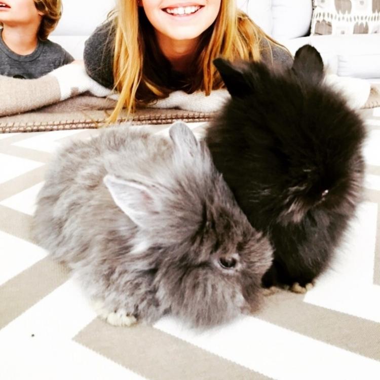 Кролики из инстаграма Гвинет Пэлтроу