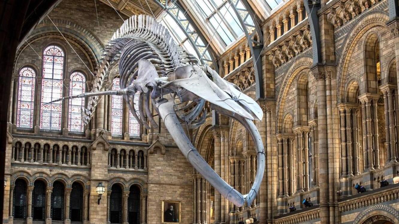 Музей естествознания, Лондон, Великобритания (5 226 000 посетителей в 2018 году)