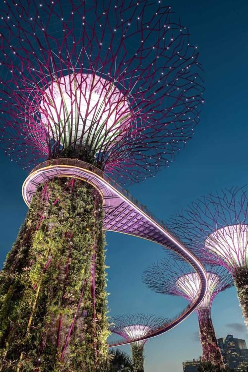 15. Сингапур. Photo: Hu Chen / Unsplash