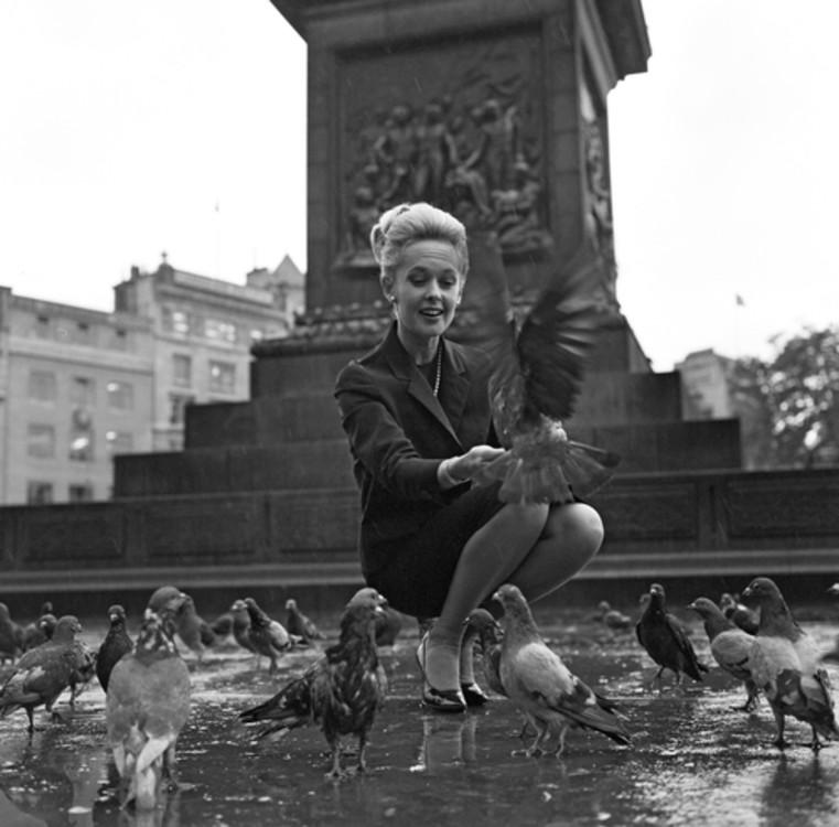 Типпи Хедрен в фильме «Птицы» в 1963 году