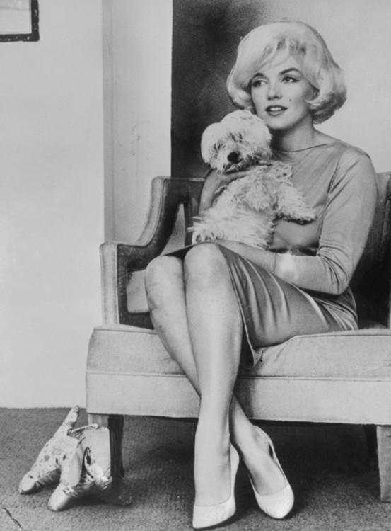 Мерилін Монро і її білий бішон фрізе на прізвисько Маф