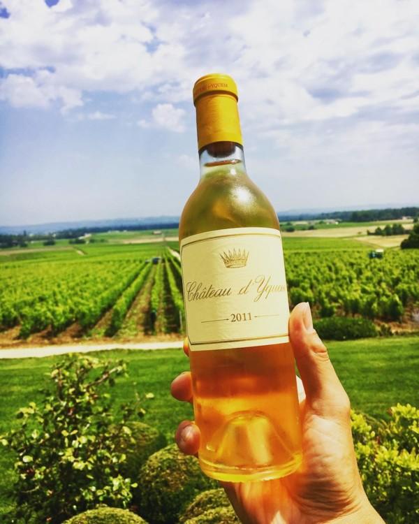 Виноградники Chateau d'Yquem @yasutaka.nakamori