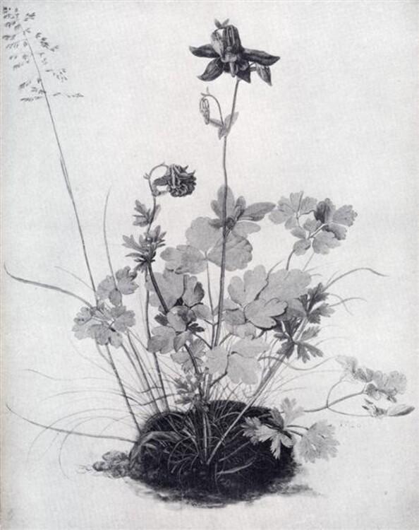 Шматок дерну з орликом, 1526; приватна колекція