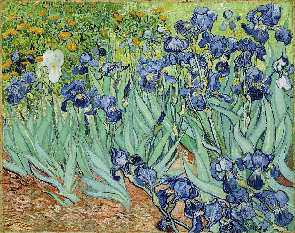 """""""Іриси"""", 1889, Музей Гетті, Лос-Анджелес, США"""