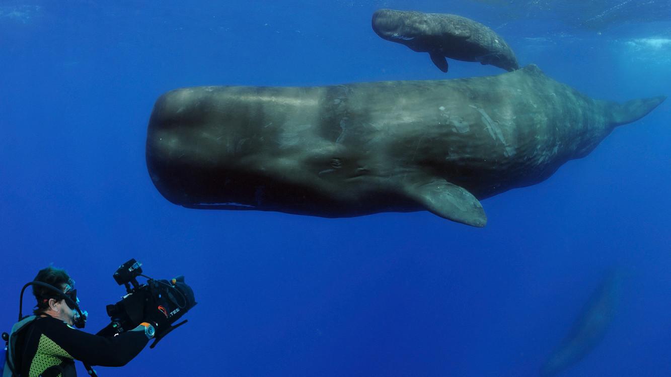 Кадр из фильма «Планета Океан»