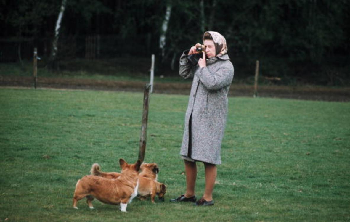 Елизавета ІІ фотографирует своих собак-корги в Большом Виндзорском парке, 1960