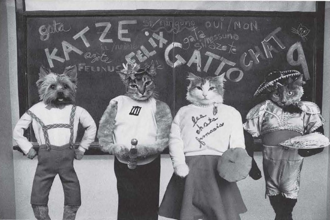 Коти в шкільній формі, з книги Cat High: The Yearbook