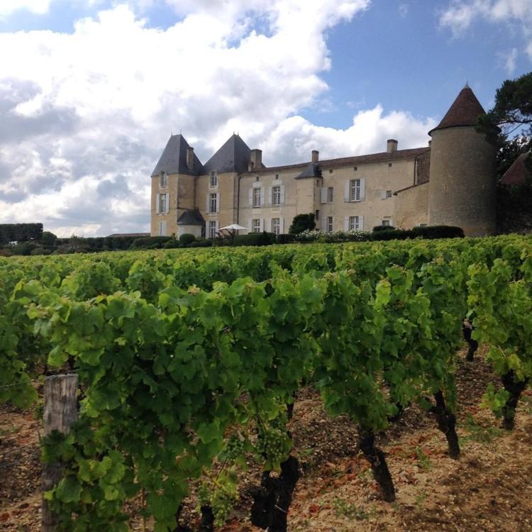 Винодельческое хозяйство Chateau d'Yquem @jmolesworth1
