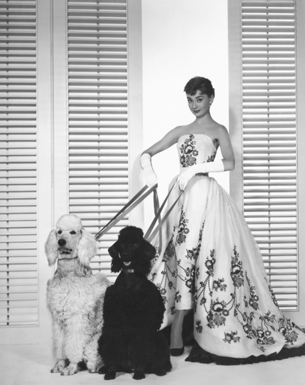"""Одрі Гепберн з пуделями на прем'єрі фільму """"Сабріна"""", 1954"""