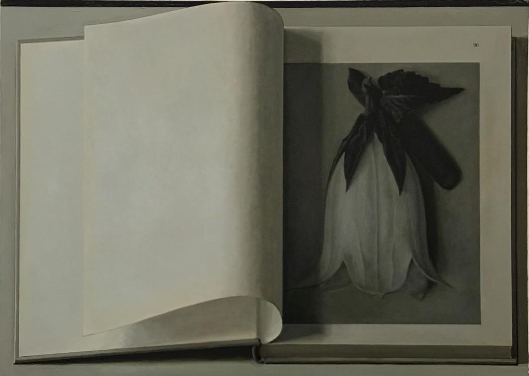 Book Painting No. 20, (Blossfeldt, Urformen der kunst, verlag Ernst wasmuth GMBH, Berlin, 1936.), 2017