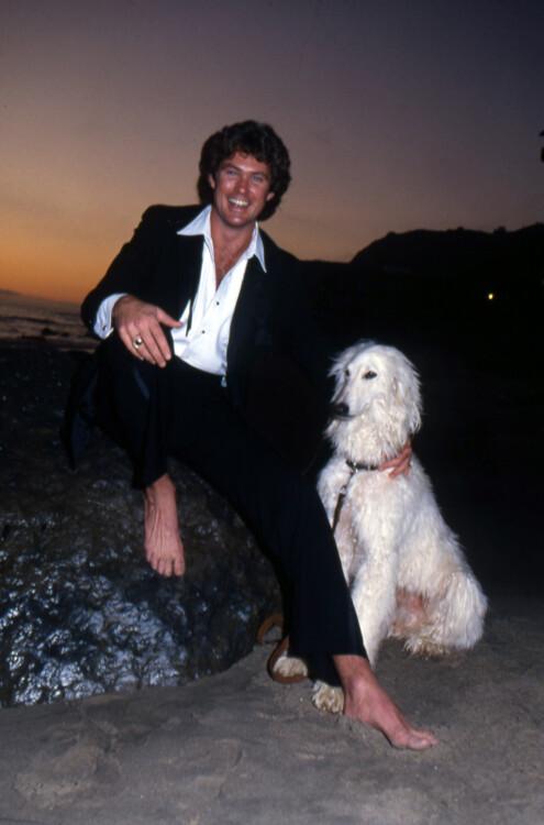 Дэвид Хассельхофф, 1984