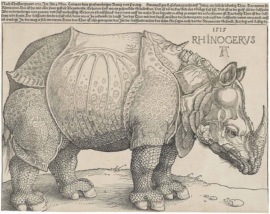 """""""Носоріг"""", 1515; Британський музей"""