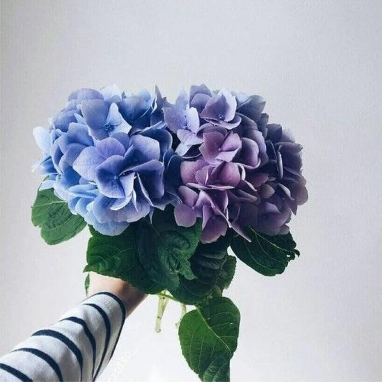 @floresdeleste