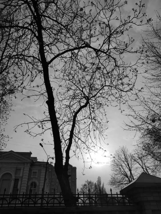 """Яркое солнце снято на Huawei P20Pro в режиме """"Монохром"""""""