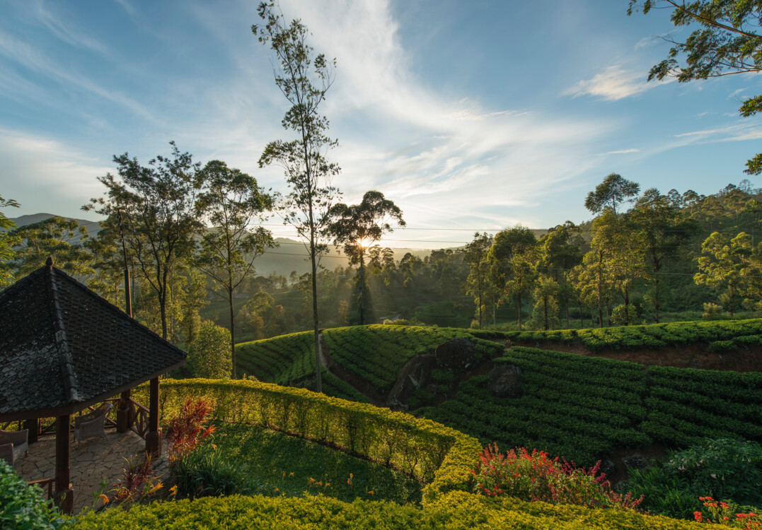 Курорт Ceylon Tea Trails