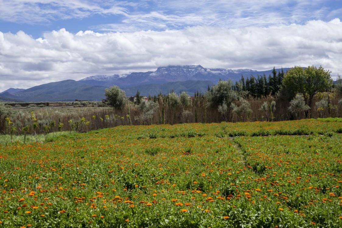 The Ourika Gardens в Марокко. Photo: Nadim ASFAR