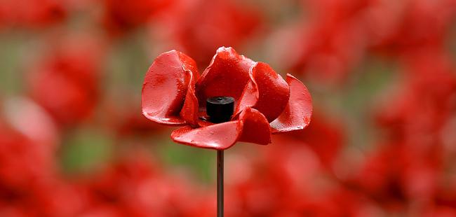 Символика цветка мак