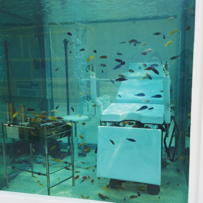 Damien Hirst's fish tank from 1999 – <Lost Love> – fills one of three adjacent structures from the original Cisteria