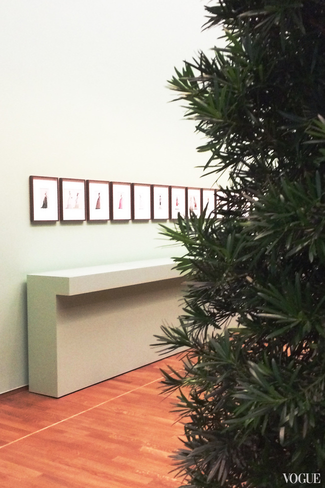 The 'New for Now' exhibition with the growing bush of Podocarpus